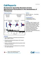 Nucleosome Assembly Dynamics Involve Spontaneous Fluctuations in the Handedness of Tetrasomes
