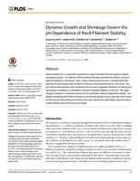 Dynamic Growth and Shrinkage Govern the pH Dependence of RecA Filament Stability