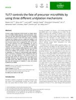 TUT7 controls the fate of precursor microRNAs by using three different uridylation mechanisms